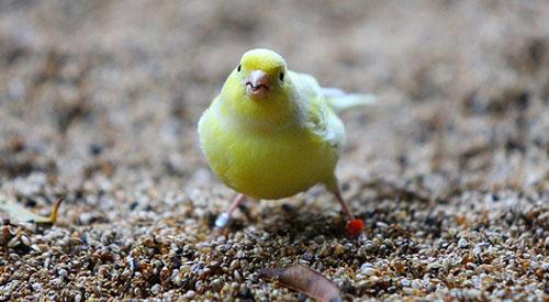 canary-jessi-bryan-cc