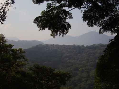 florestatijucarj