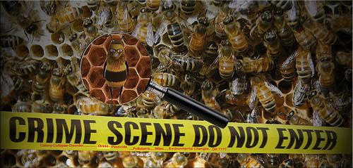 bees-d70focus-cc