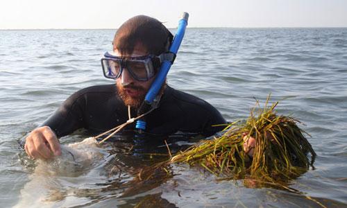 seagrass-DanielWhite