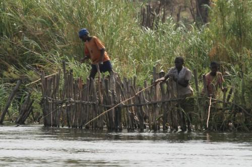 Boys fishing the Zambezi River behind a crocodile barrier
