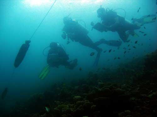 Size-estimation-underwater_Andreas-Muljadi