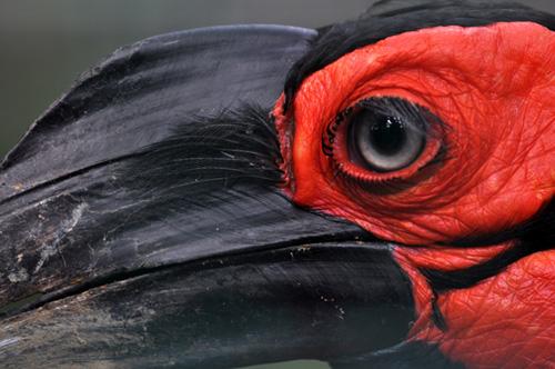 Birdpark © MalaysiaGuy