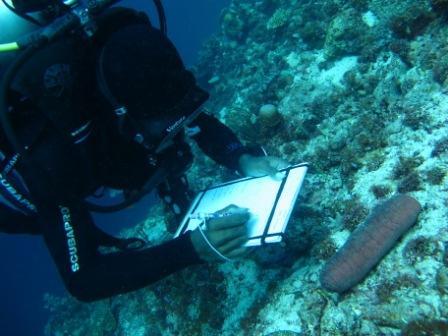Ali recording sea cucumber