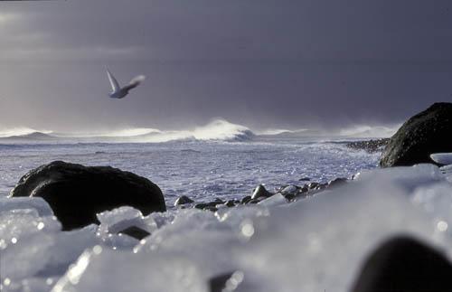 Heard Island coastline