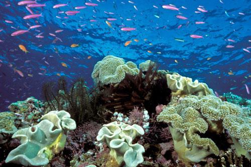 Coral reef off Fiji islands in the Pacific Ocean