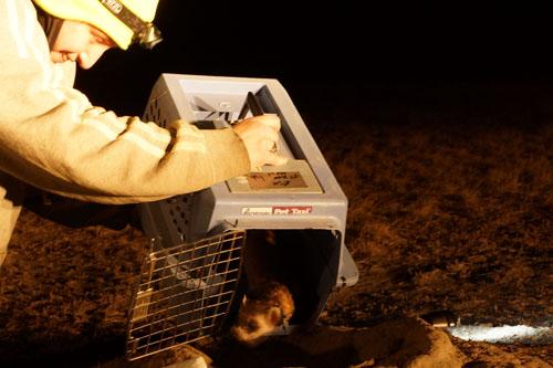 Ferret Release