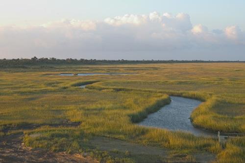 Marshes of Hog Island, Virginia Coast Reserve