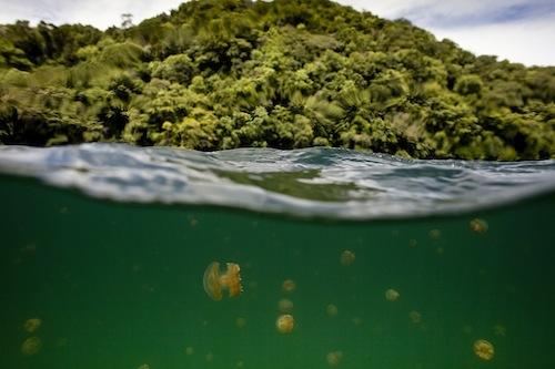 The Republic of Palau's Jellyfish Lake