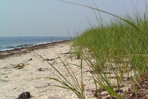 long-island-beach-500x333